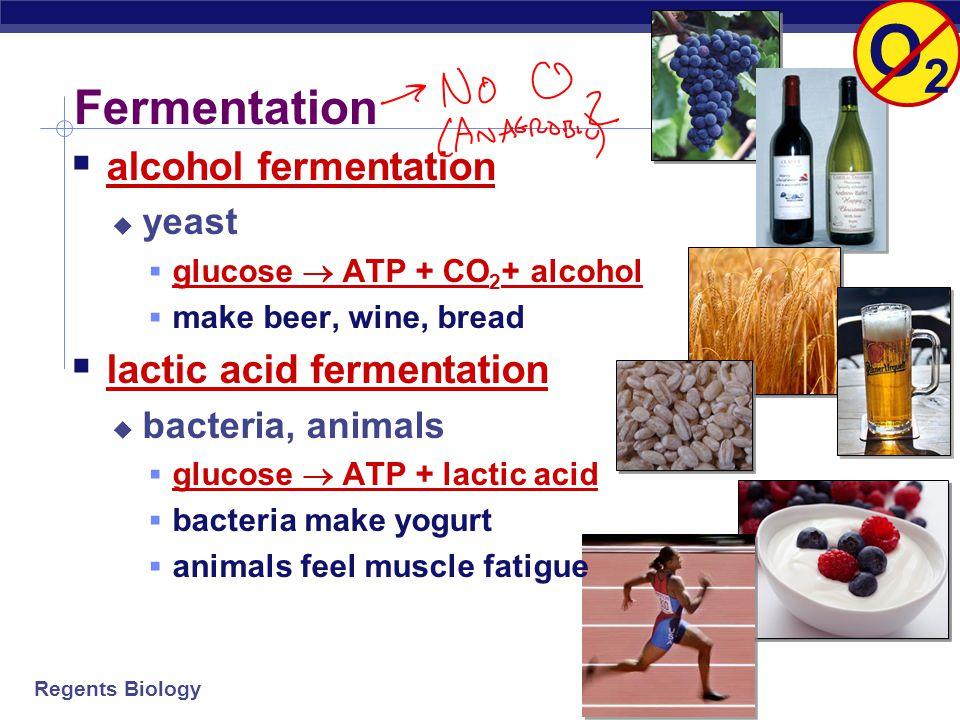 O2 Fermentation alcohol fermentation lactic acid fermentation yeast