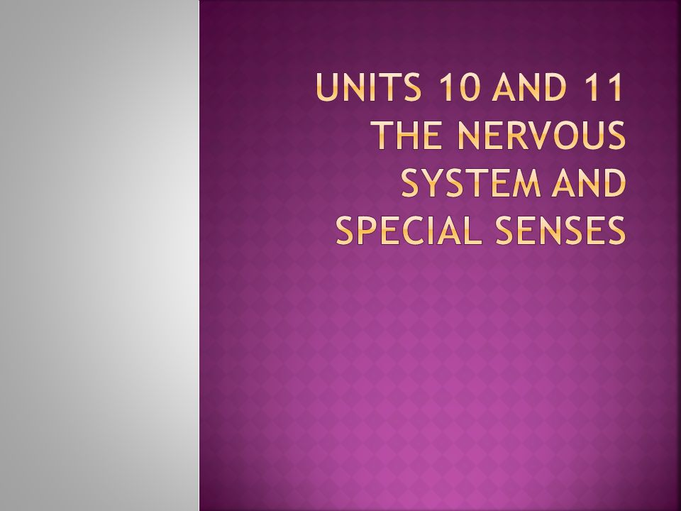Units 10 and 11 The Nervous system and special senses