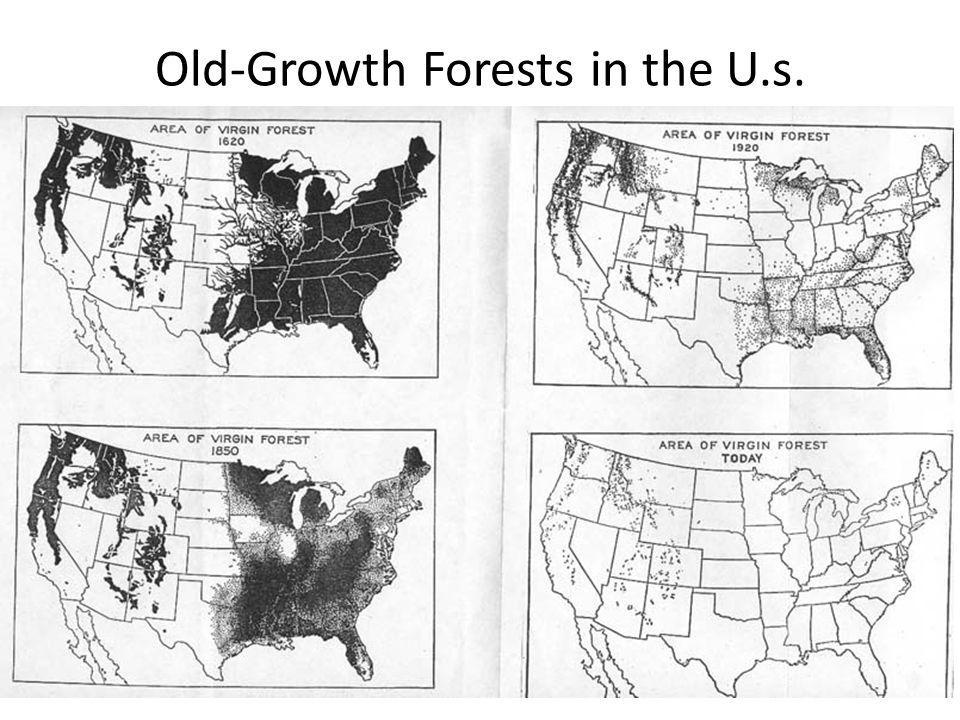 Old-Growth Forests in the U.s.
