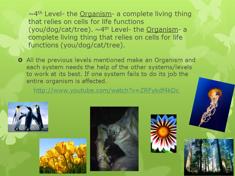 ~4th Level- the Organism- a complete living thing that relies on cells for life functions (you/dog/cat/tree). ~4th Level- the Organism- a complete living thing that relies on cells for life functions (you/dog/cat/tree).