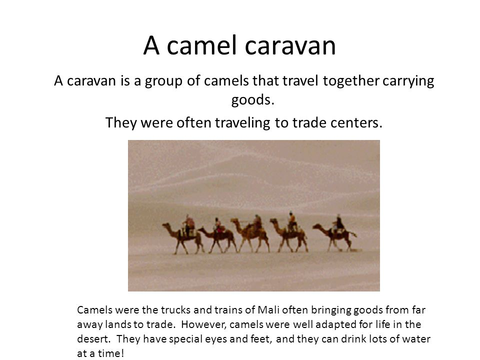 A camel caravan A caravan is a group of camels that travel together carrying goods. They were often traveling to trade centers.