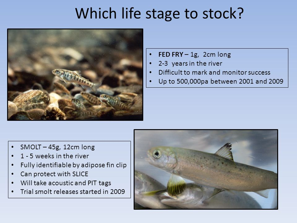 Which life stage to stock