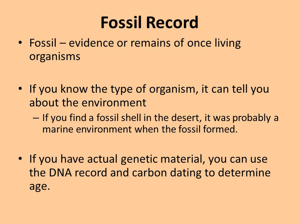 Fossil Record Fossil – evidence or remains of once living organisms
