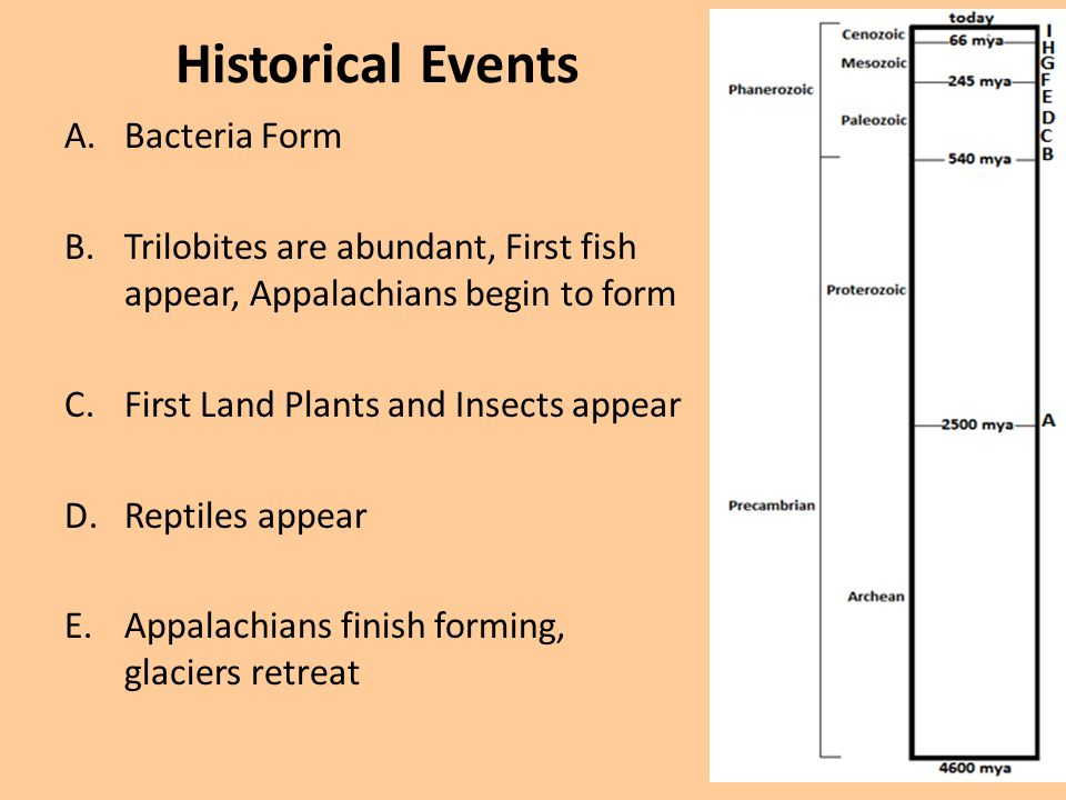 Historical Events Bacteria Form