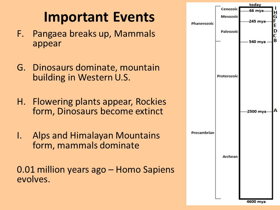 Important Events Pangaea breaks up, Mammals appear