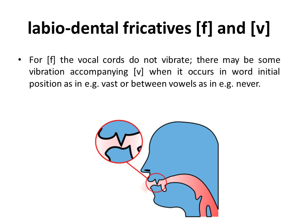 labio-dental fricatives [f] and [v]