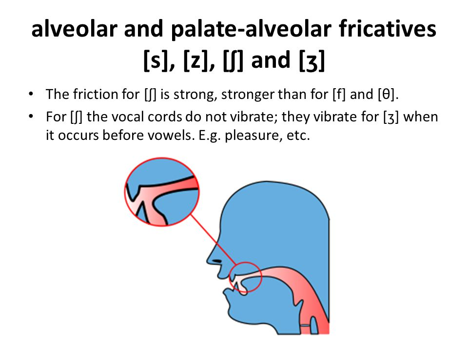alveolar and palate-alveolar fricatives [s], [z], [ʃ] and [ʒ]