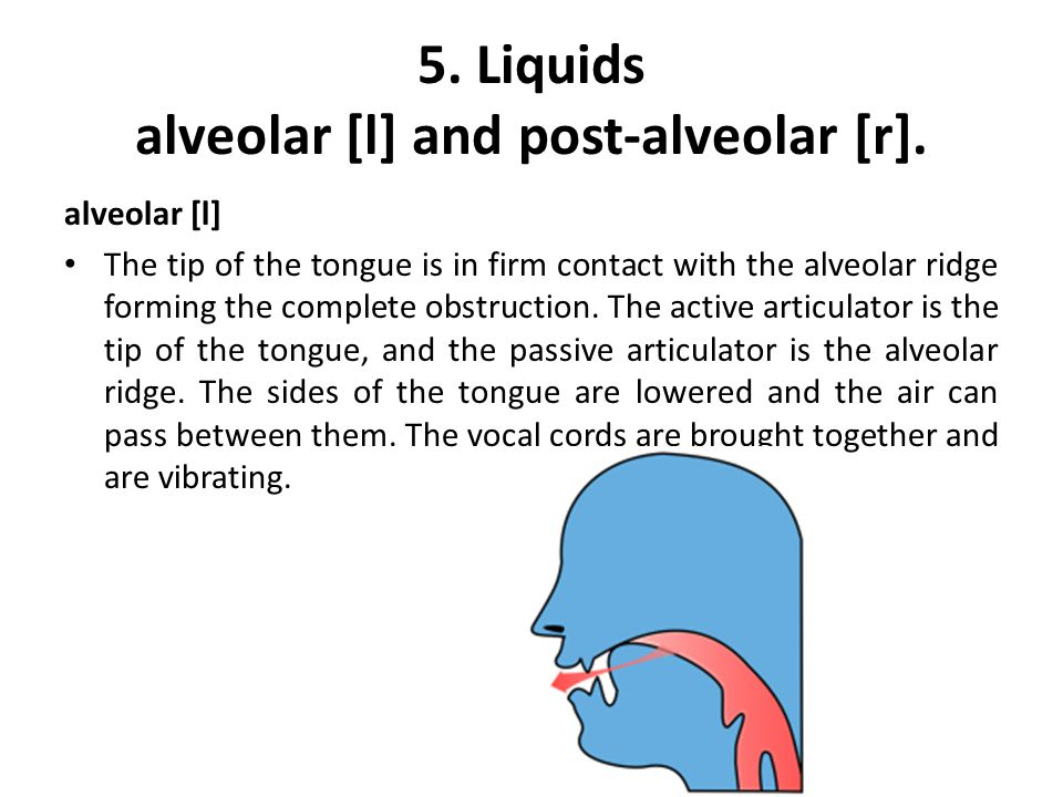 5. Liquids alveolar [l] and post-alveolar [r].