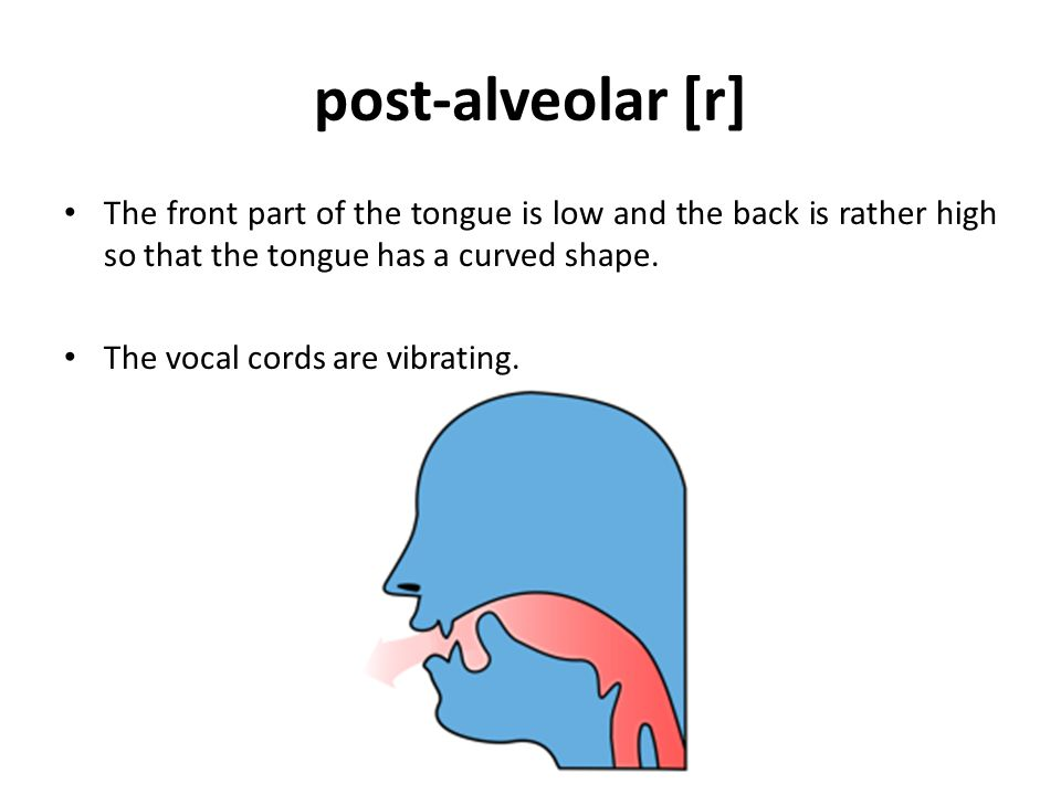 post-alveolar [r] The front part of the tongue is low and the back is rather high so that the tongue has a curved shape.