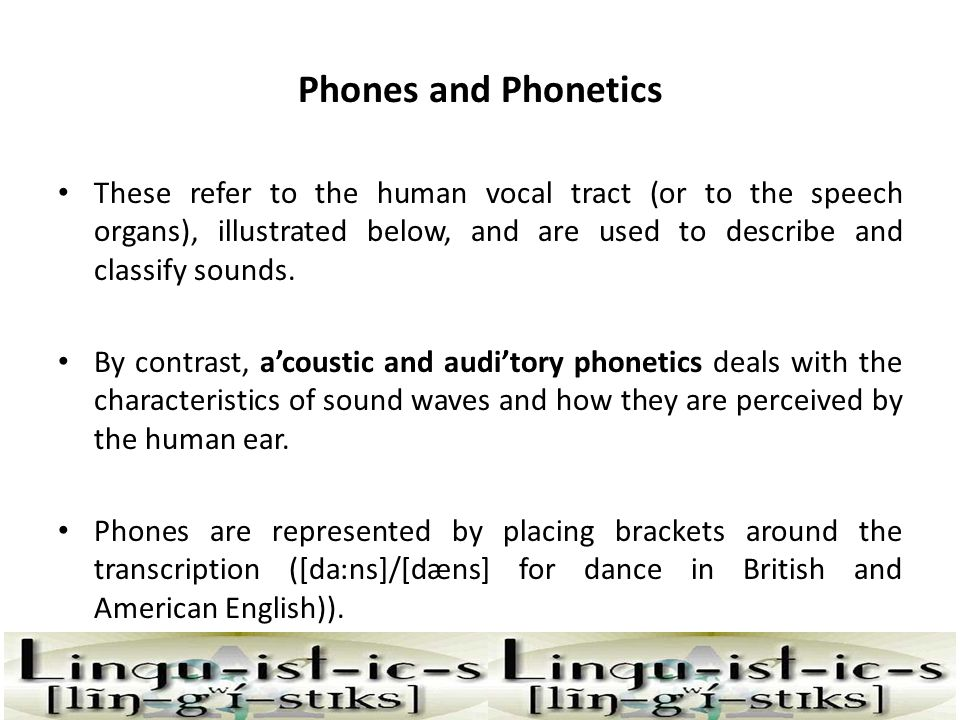 Phones and Phonetics These refer to the human vocal tract (or to the speech organs), illustrated below, and are used to describe and classify sounds.