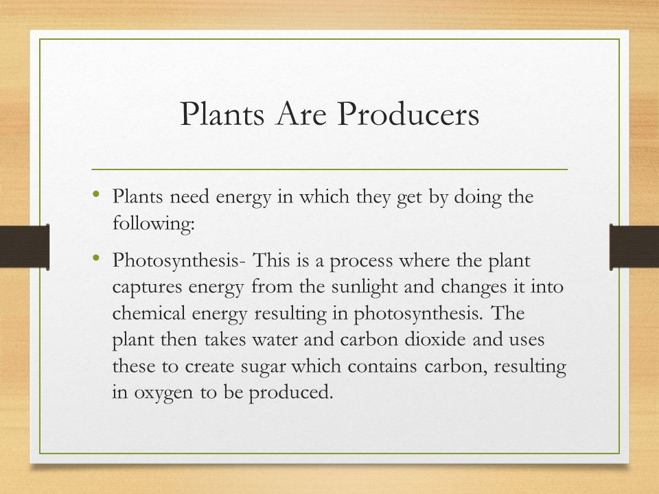 Plants Are Producers Plants need energy in which they get by doing the following: