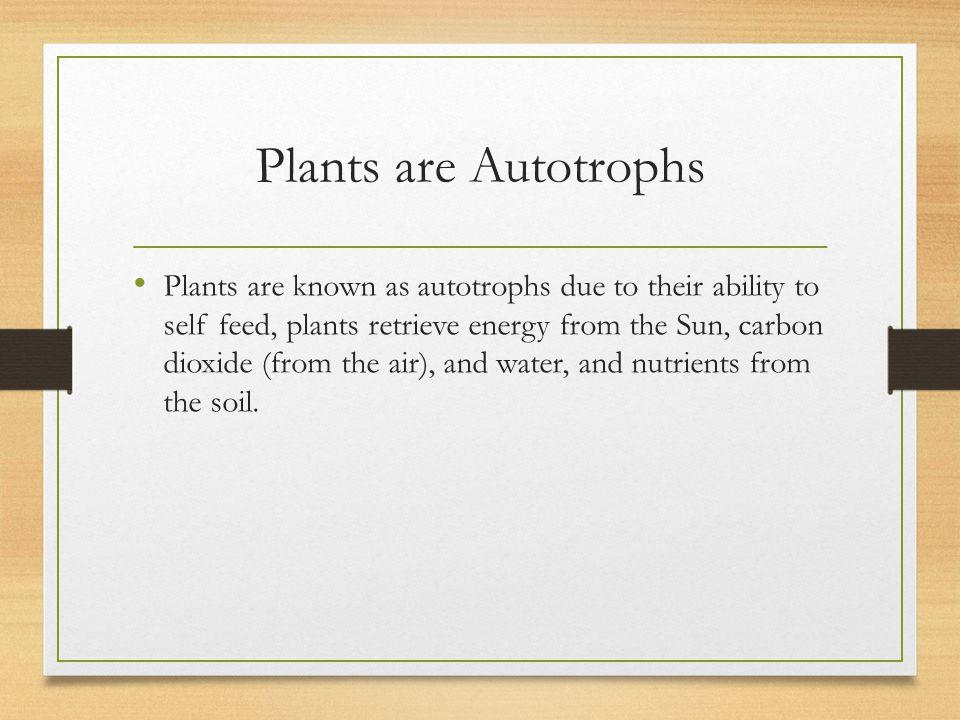 Plants are Autotrophs