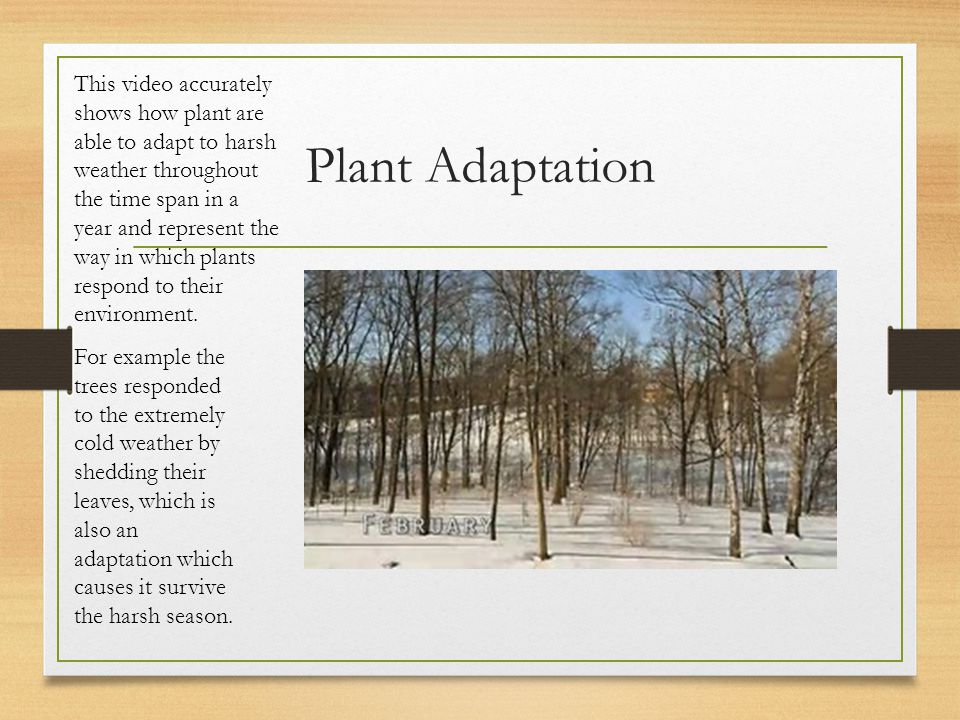 This video accurately shows how plant are able to adapt to harsh weather throughout the time span in a year and represent the way in which plants respond to their environment.