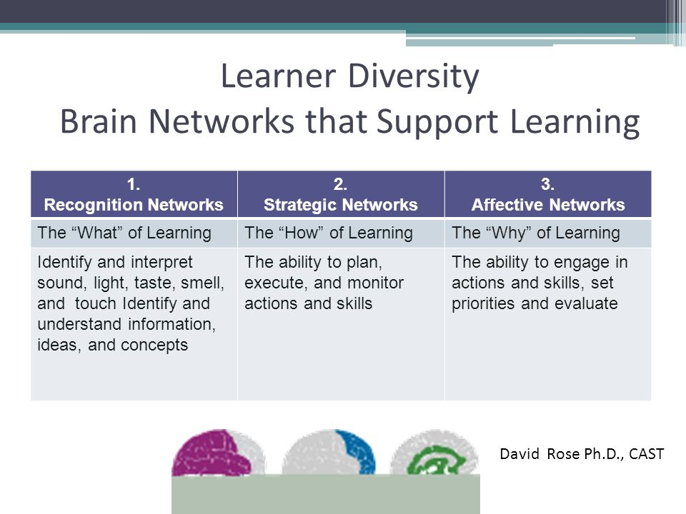 Learner Diversity Brain Networks that Support Learning