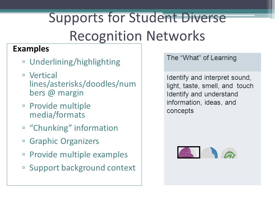Supports for Student Diverse Recognition Networks