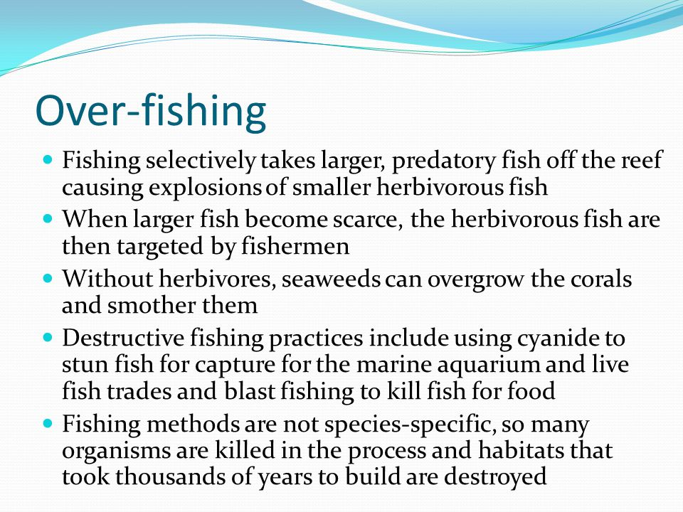 Over-fishing Fishing selectively takes larger, predatory fish off the reef causing explosions of smaller herbivorous fish.