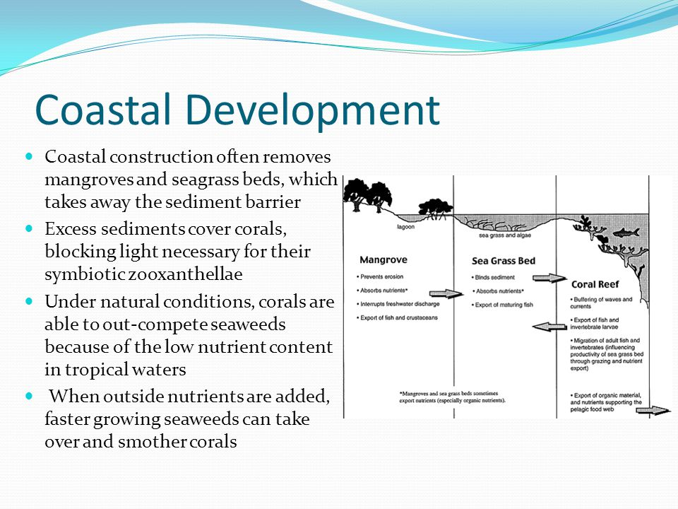 Coastal Development Coastal construction often removes mangroves and seagrass beds, which takes away the sediment barrier.