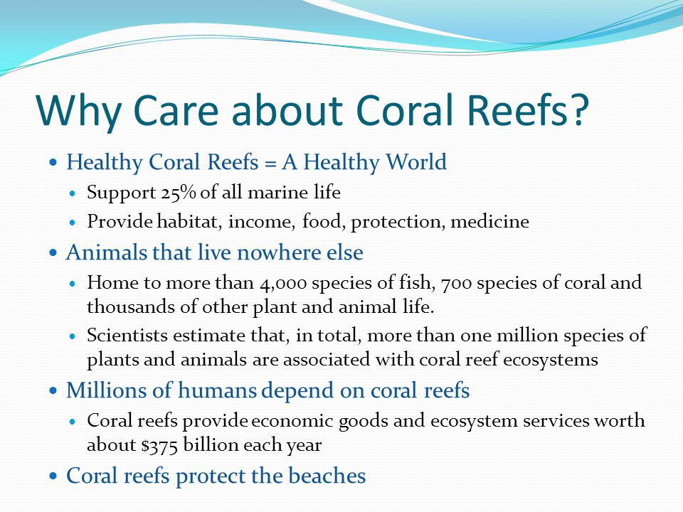 Why Care about Coral Reefs
