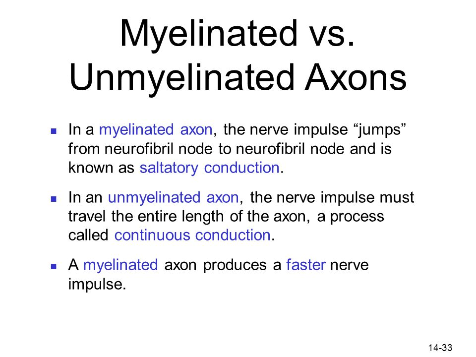 Myelinated vs. Unmyelinated Axons