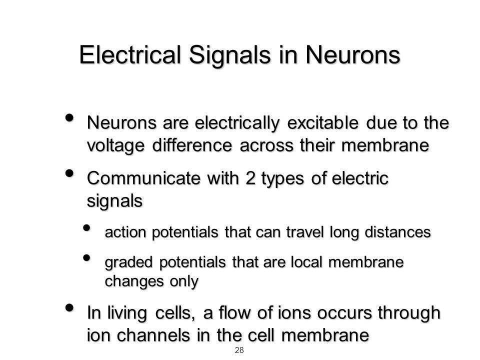 Electrical Signals in Neurons