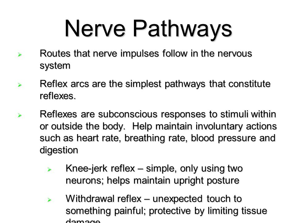 Nerve Pathways Routes that nerve impulses follow in the nervous system