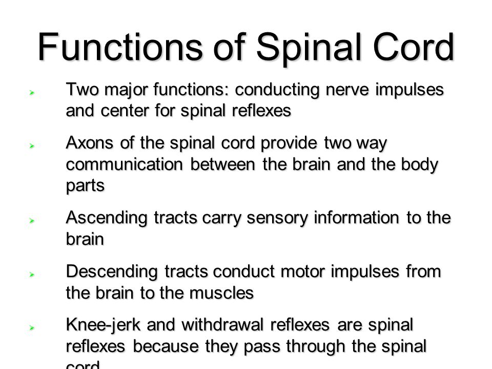 Functions of Spinal Cord