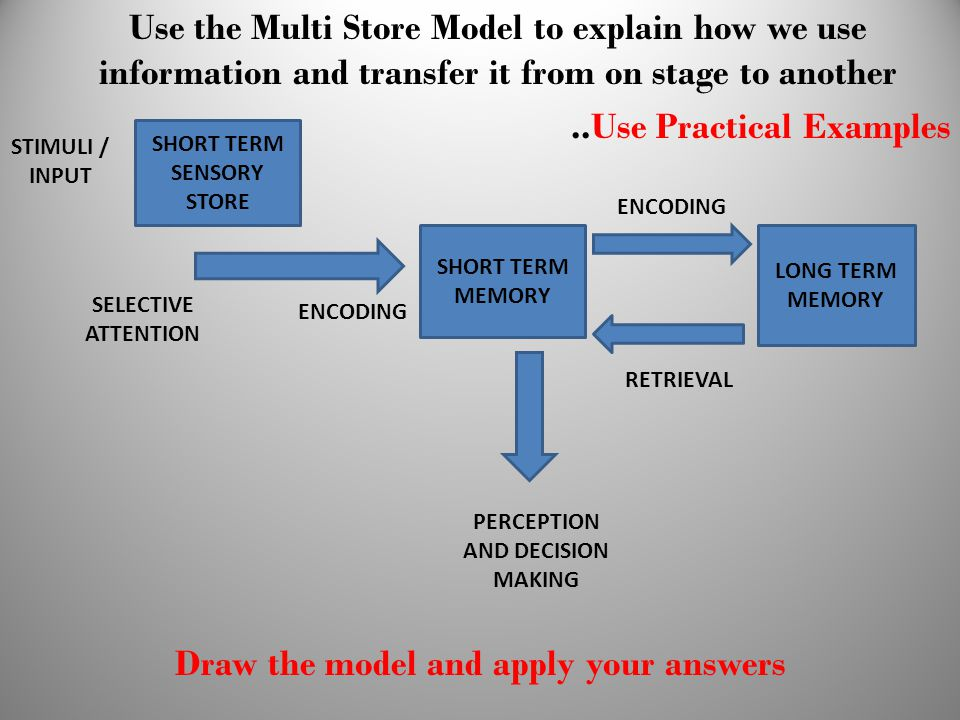 Draw the model and apply your answers SHORT TERM SENSORY STORE