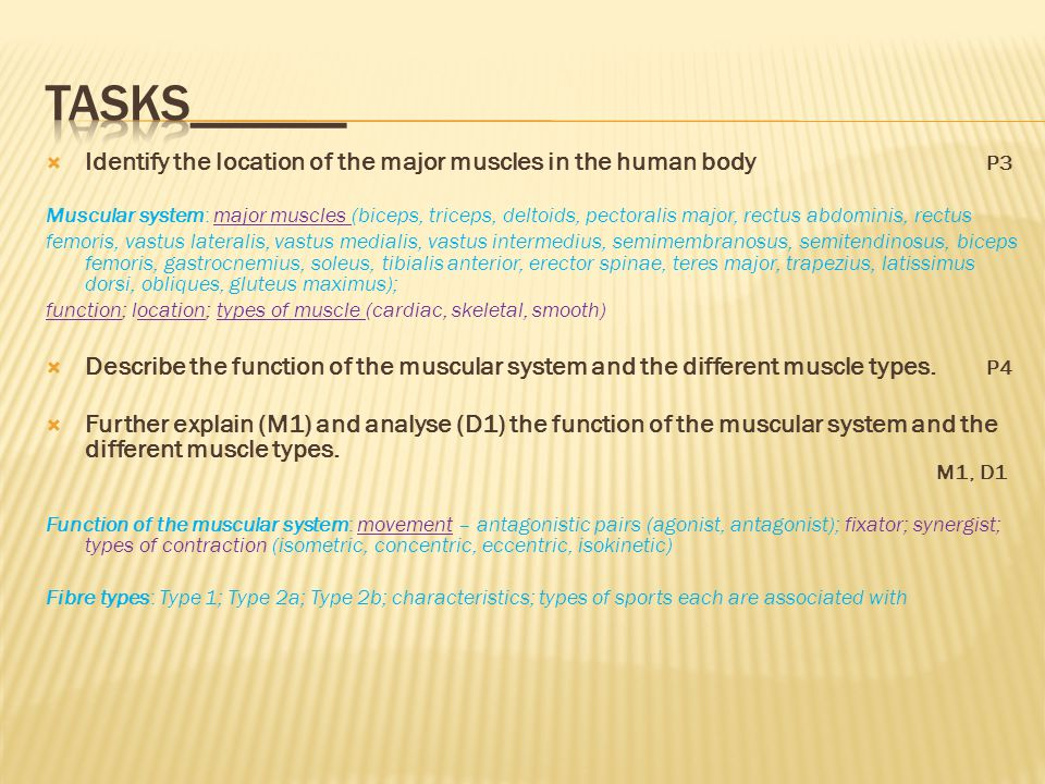 assignment 1 continued……………..p3/p4/m1/d1 the muscular system - ppt, Muscles