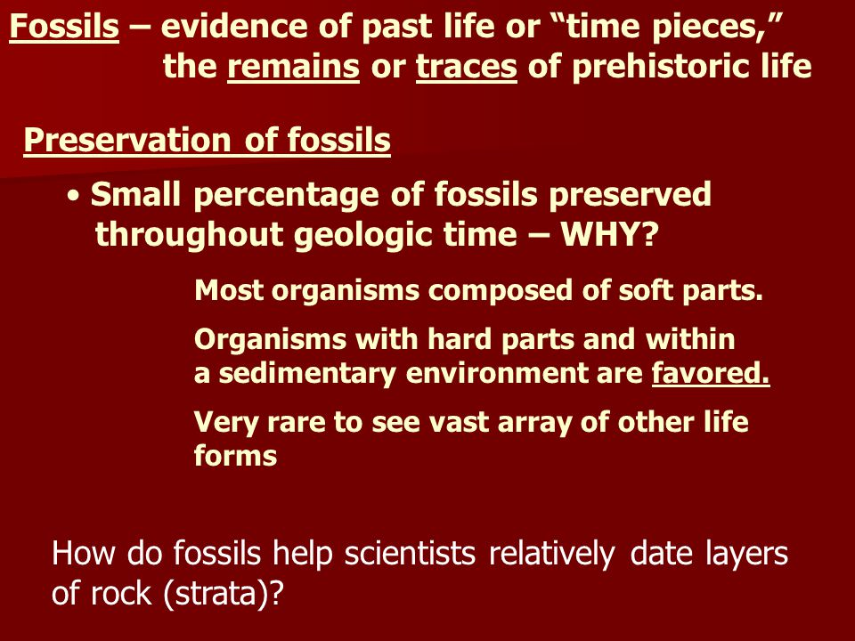 Fossils – evidence of past life or time pieces,