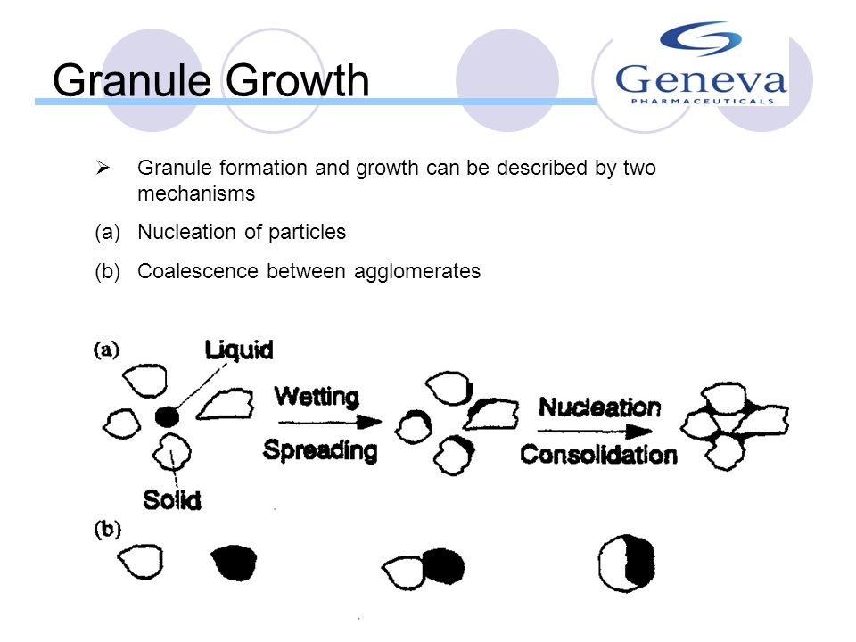 Granule Growth Granule formation and growth can be described by two mechanisms. Nucleation of particles.