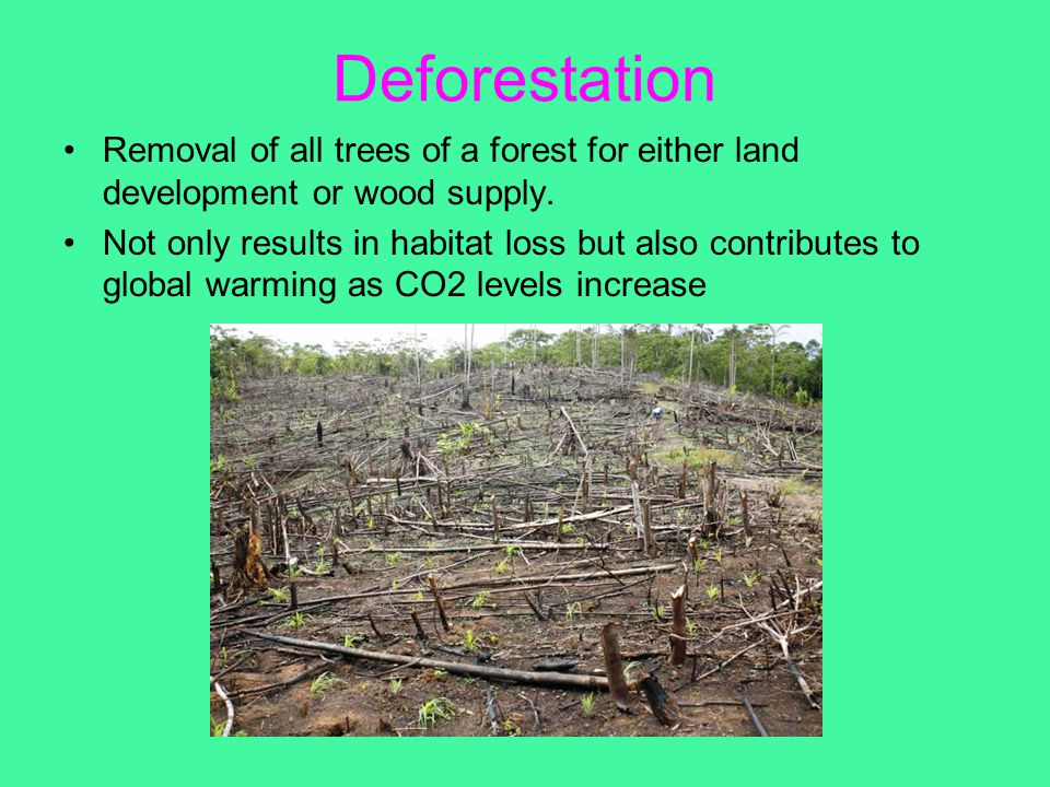 Deforestation Removal of all trees of a forest for either land development or wood supply.