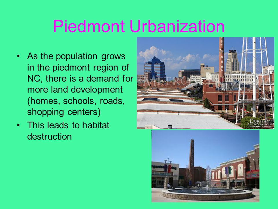 Piedmont Urbanization