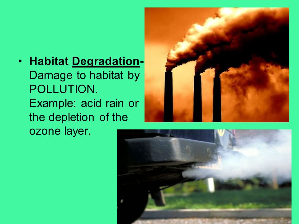 Habitat Degradation- Damage to habitat by POLLUTION
