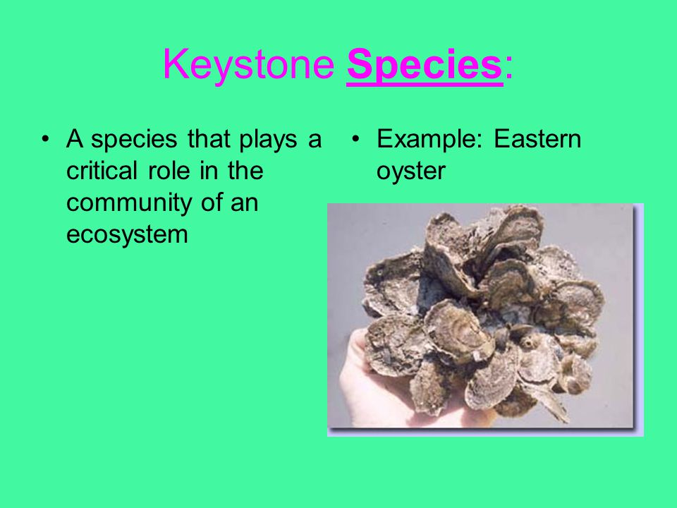 Keystone Species: A species that plays a critical role in the community of an ecosystem.