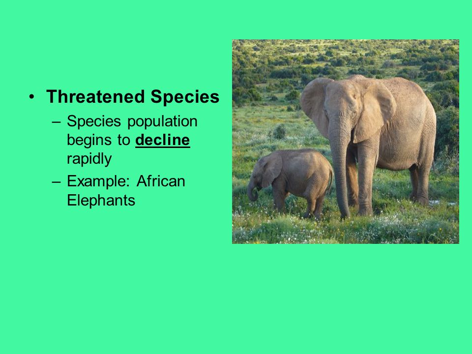 Threatened Species Species population begins to decline rapidly