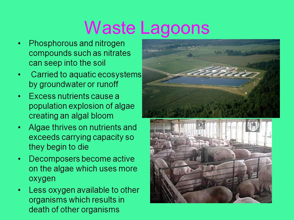 Waste Lagoons Phosphorous and nitrogen compounds such as nitrates can seep into the soil. Carried to aquatic ecosystems by groundwater or runoff.