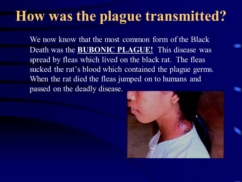 How was the plague transmitted