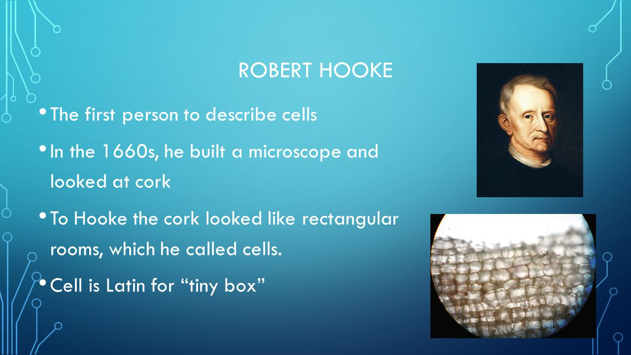 Robert Hooke The first person to describe cells