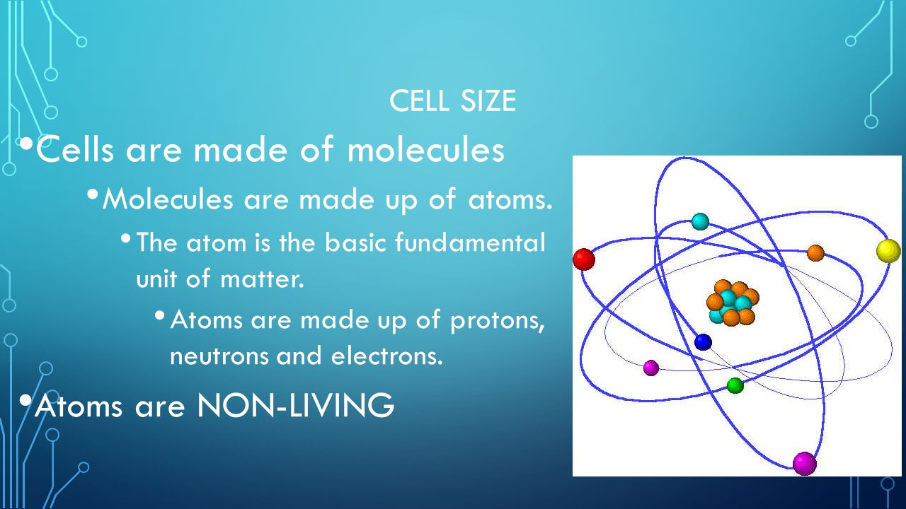 Cells are made of molecules