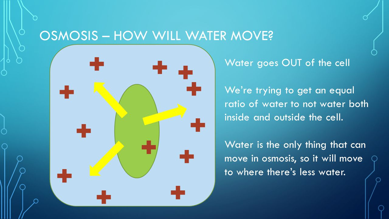 Osmosis – how will water move