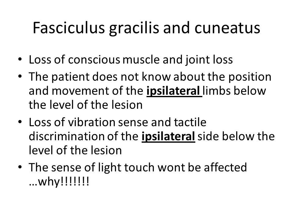 Fasciculus gracilis and cuneatus