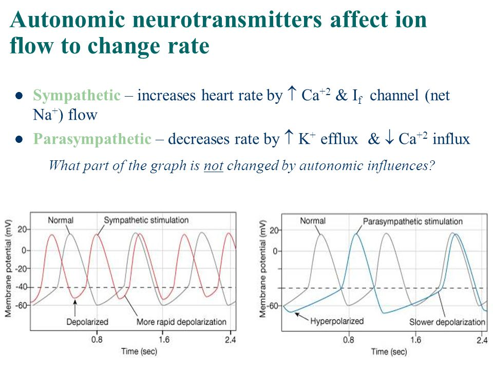 Autonomic neurotransmitters affect ion flow to change rate