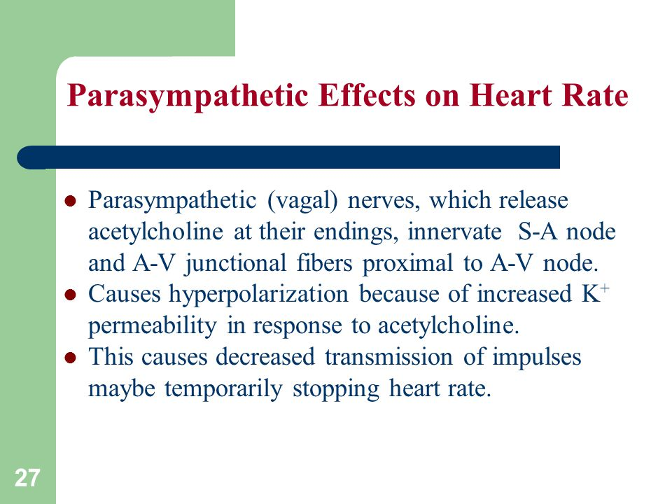 Parasympathetic Effects on Heart Rate