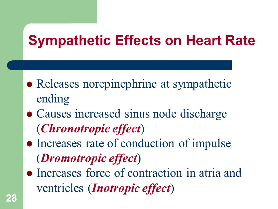 Sympathetic Effects on Heart Rate