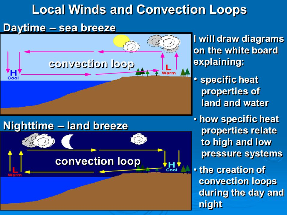 Local Winds and Convection Loops