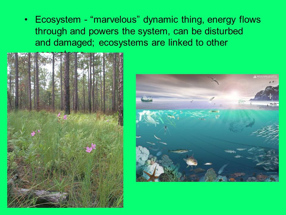 Ecosystem - marvelous dynamic thing, energy flows through and powers the system, can be disturbed and damaged; ecosystems are linked to other ecosystems