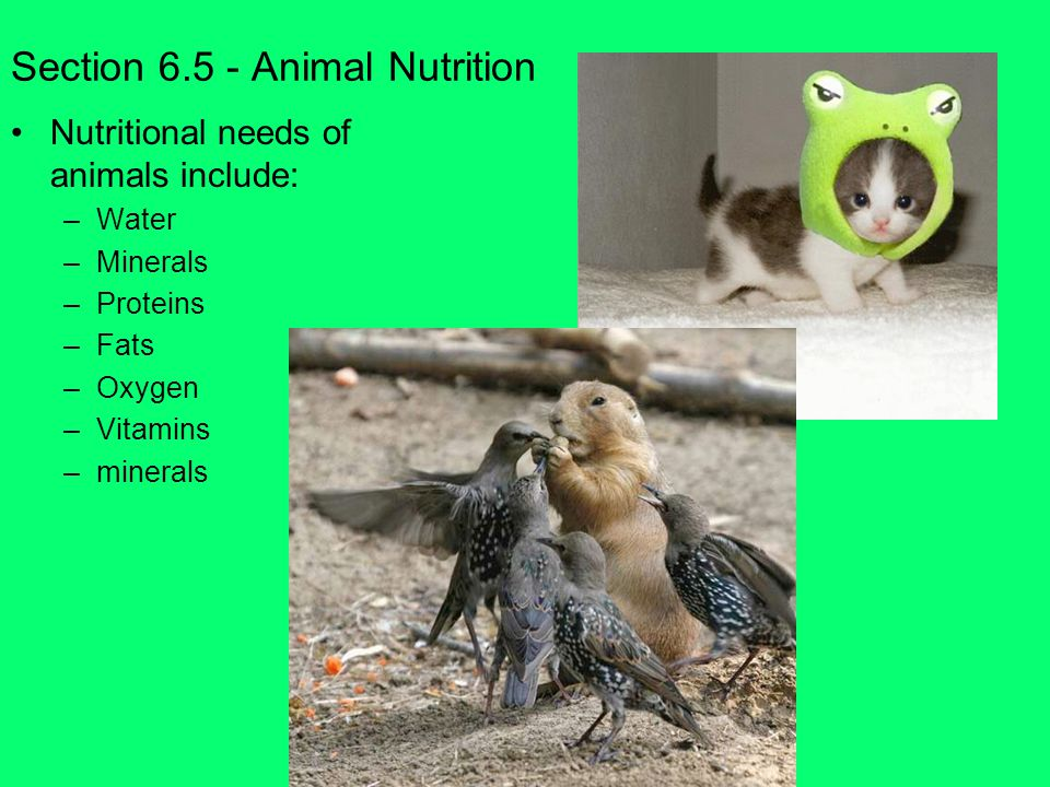 Section 6.5 - Animal Nutrition