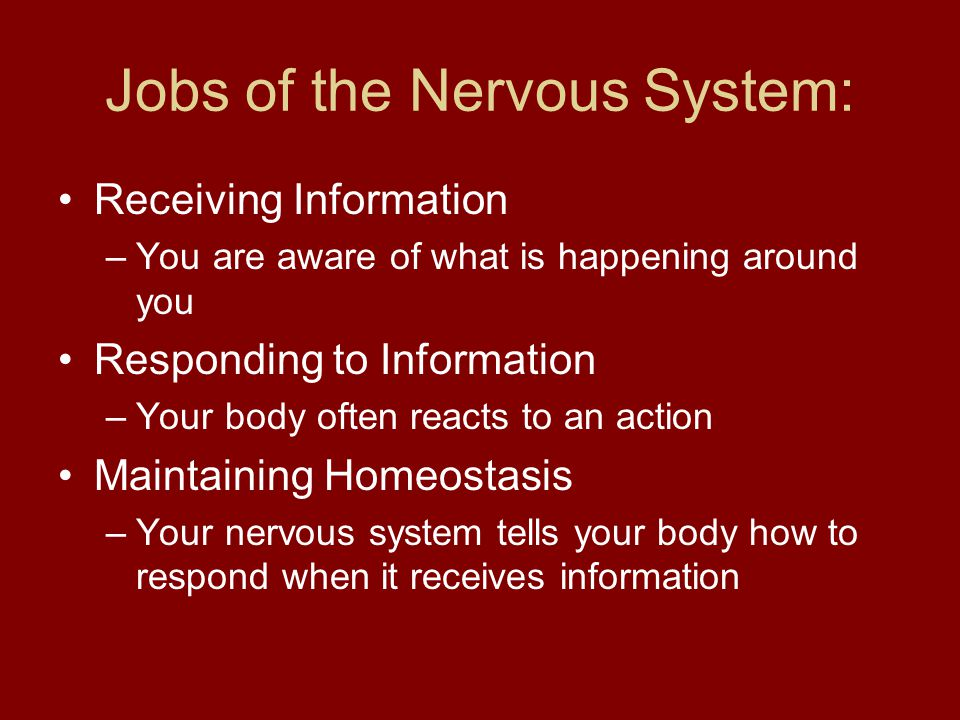 Jobs of the Nervous System: