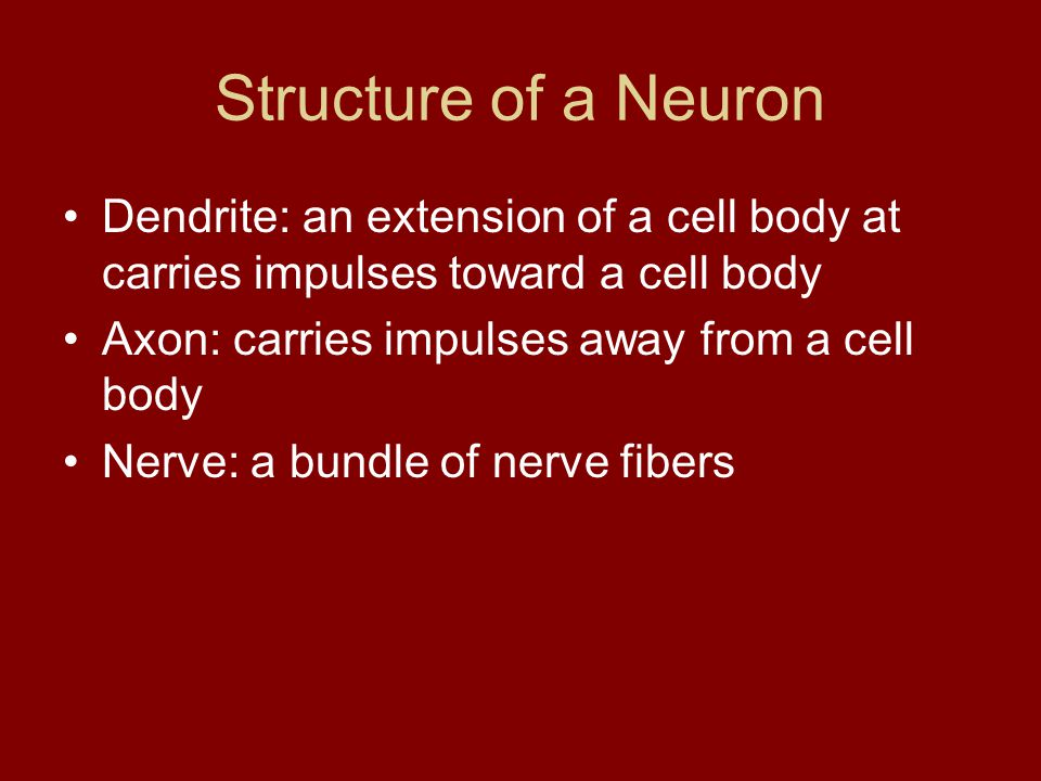 Structure of a Neuron Dendrite: an extension of a cell body at carries impulses toward a cell body.