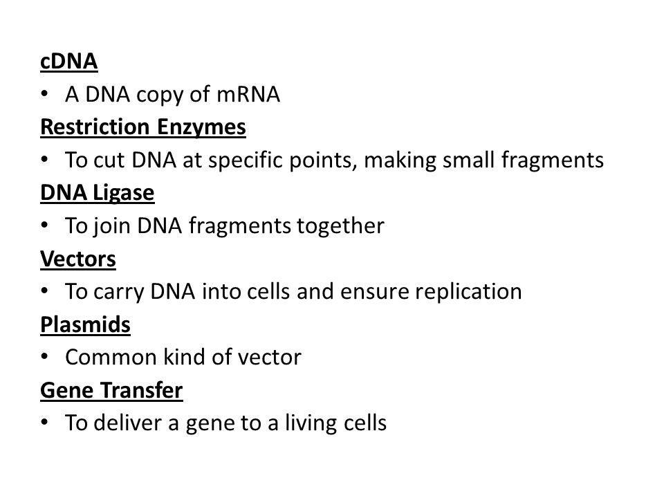 cDNA A DNA copy of mRNA. Restriction Enzymes. To cut DNA at specific points, making small fragments.